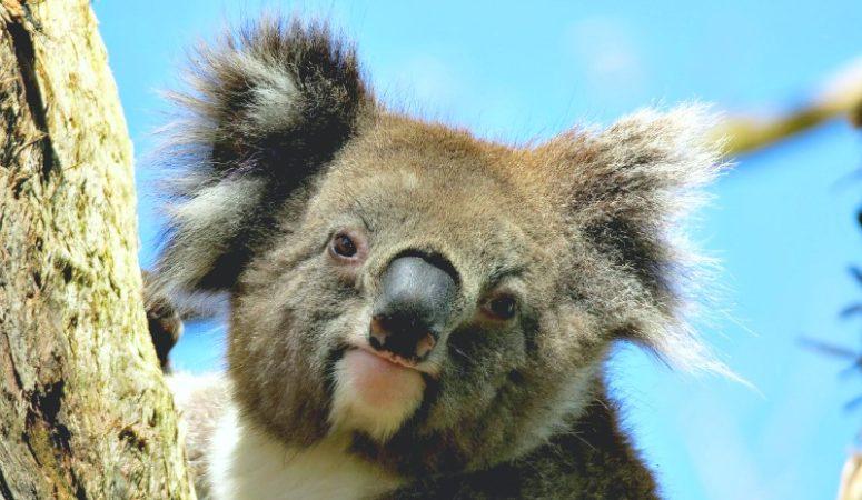 Episode 004: Visiting Australia