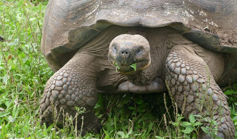 086: Planning a Trip to the Galapagos