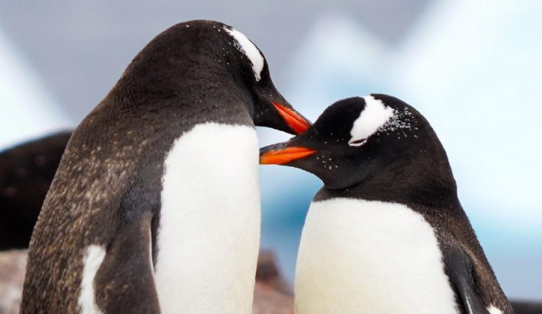 119: What you need to know about planning a trip to Antarctica